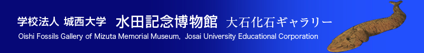 学校法人城西大学 水田記念図書館 大石化石ギャラリー Oishi Fossils Gallery of Mizuta Memorial Museum・Josai University Educational Corporation